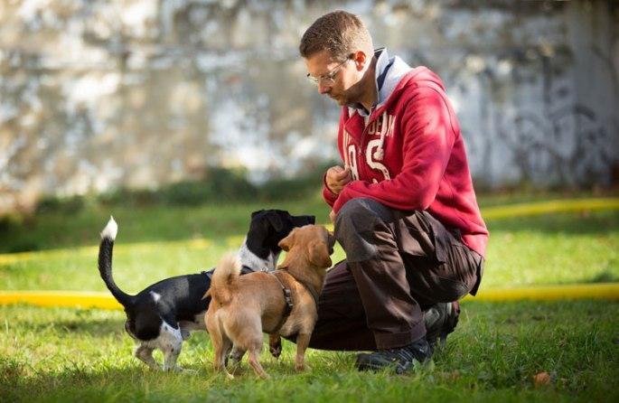Hundetrainer Kai Hartmann aus Dresden
